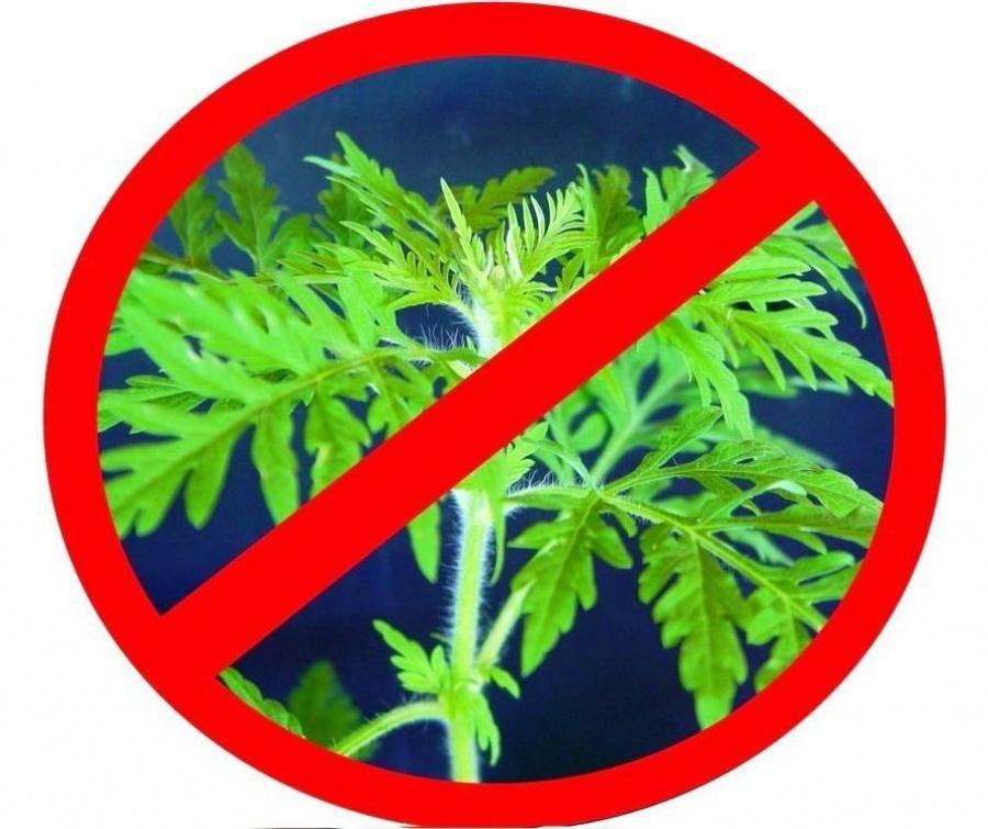 Меры борьбы с карантинными растениями