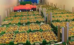 В Ростовской области уничтожено 9 тонн растительной продукции, запрещенной к ввозу в Российскую Федерацию