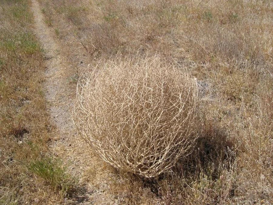О факте неиспользования земельного участка сельскохозяйственного назначения в Ростовской области