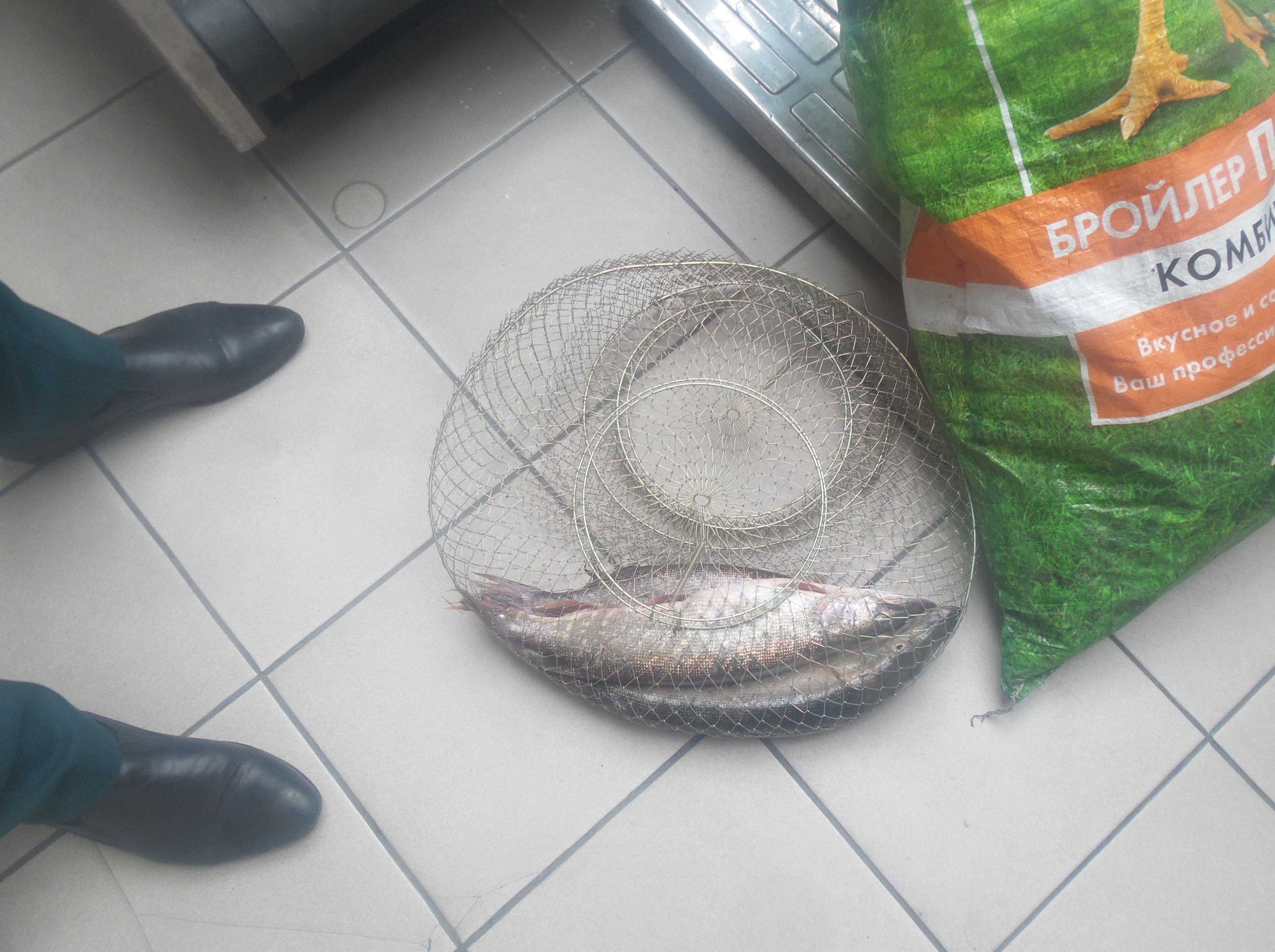 Рыба, перемещаемая в отсутствии документов возвращена на территорию Украины
