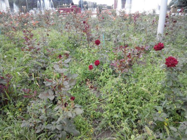 В Ростовской области выявлен ряд нарушений требований земельного законодательства РФ