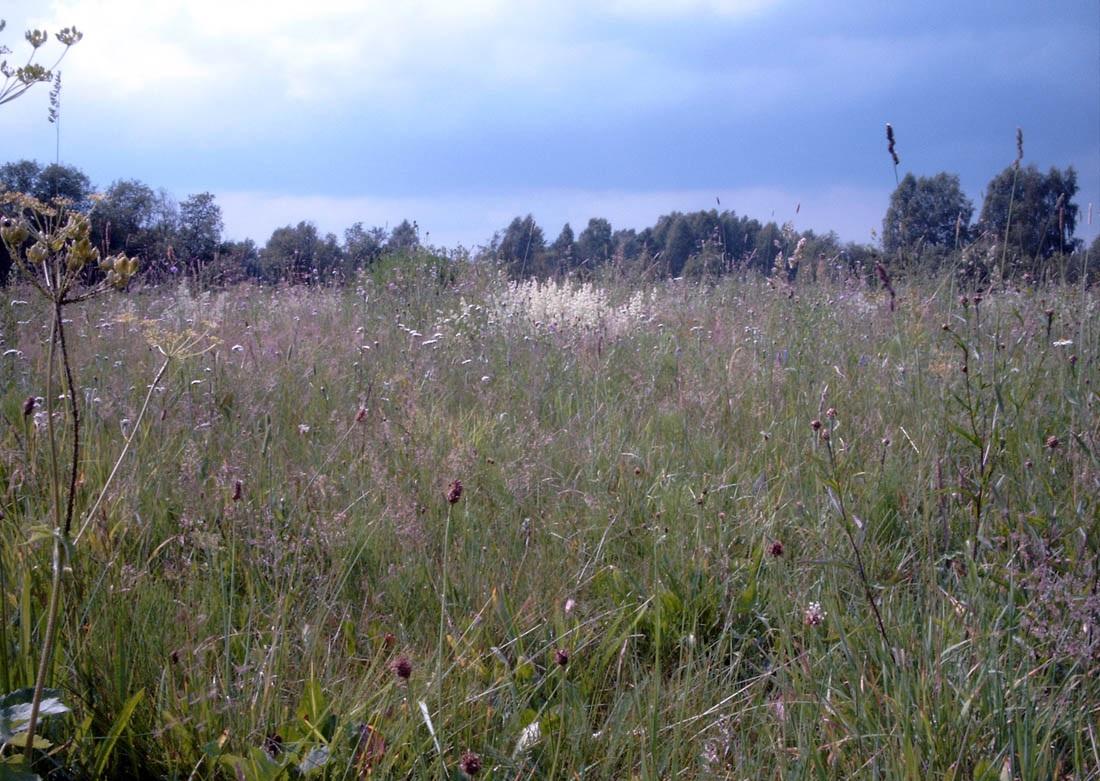 Управлением Россельхознадзора выявлен факт зарастания сельхозземель в Ростовской области
