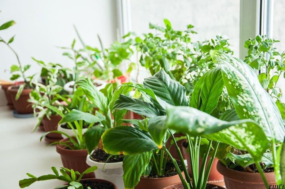Комнатные растения очищают воздух и лечат депрессию