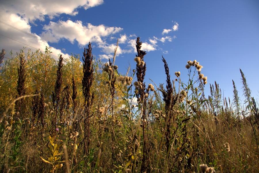 Захламление и зарастание сельхозугодий сорной растительностью выявлено Управлением Россельхознадзора на территории Ростовской области