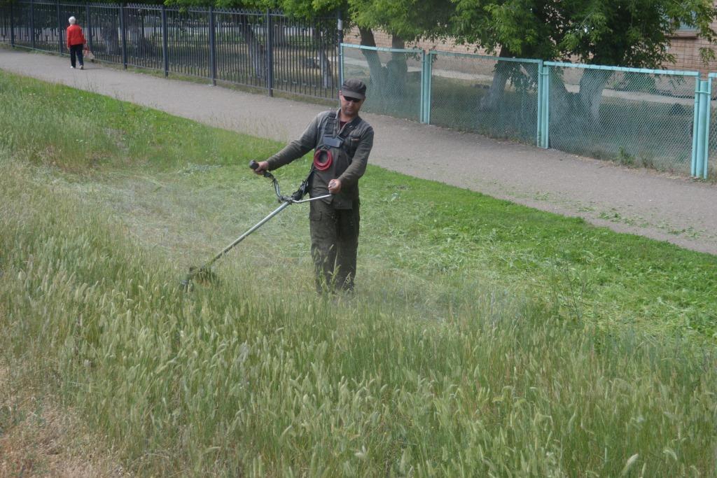 Беспощадный бой с сорной растительностью