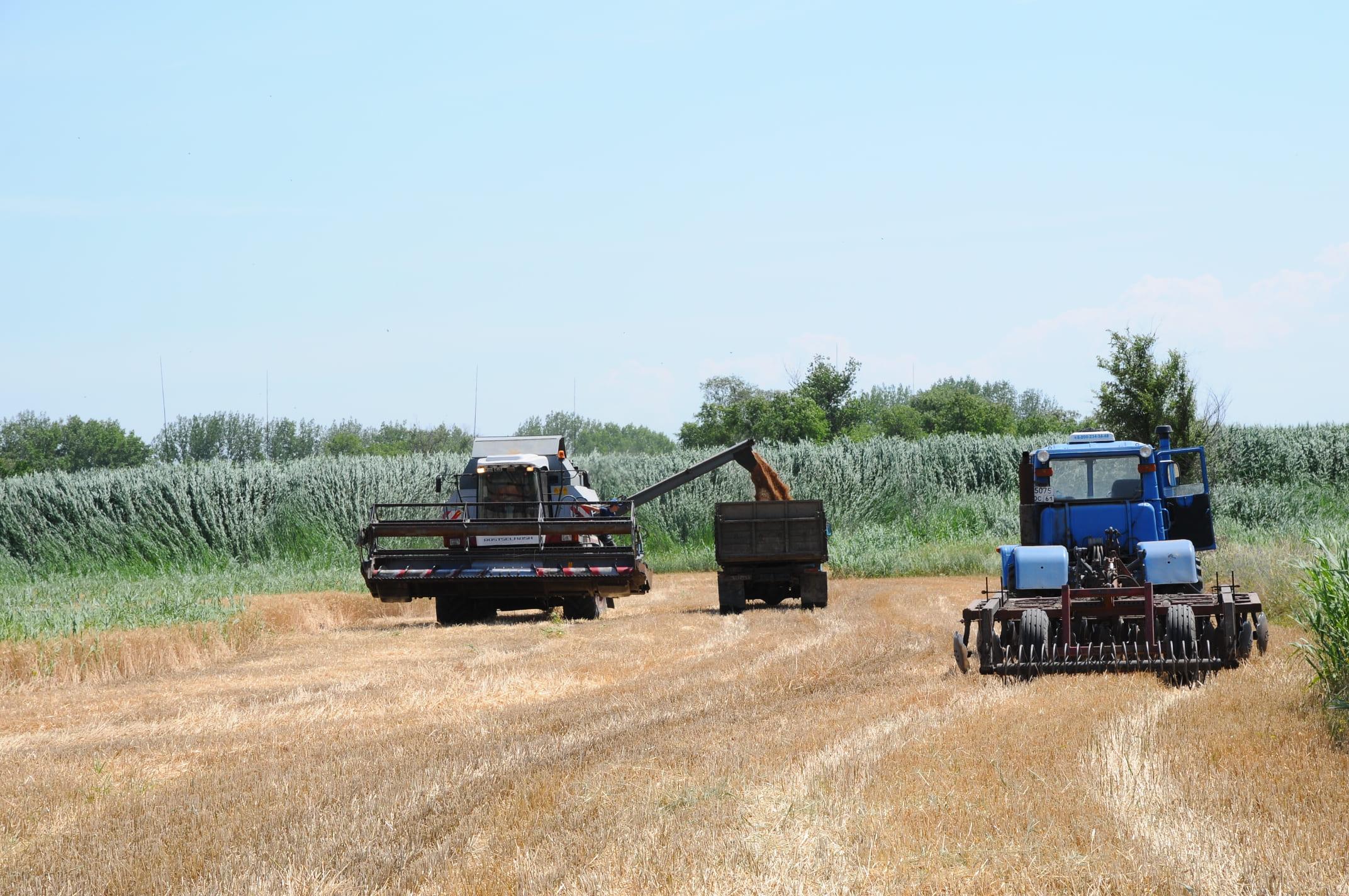 На Дону убрано более четверти площадей зерновых культур