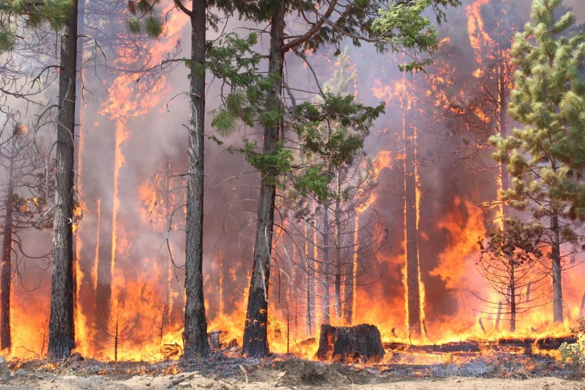 Сохраним донские леса от пожаров