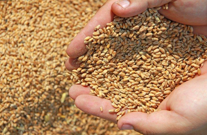 В партиях семян озимых культур, подготовленных к высеву в Ростовской области выявлены несоответствия