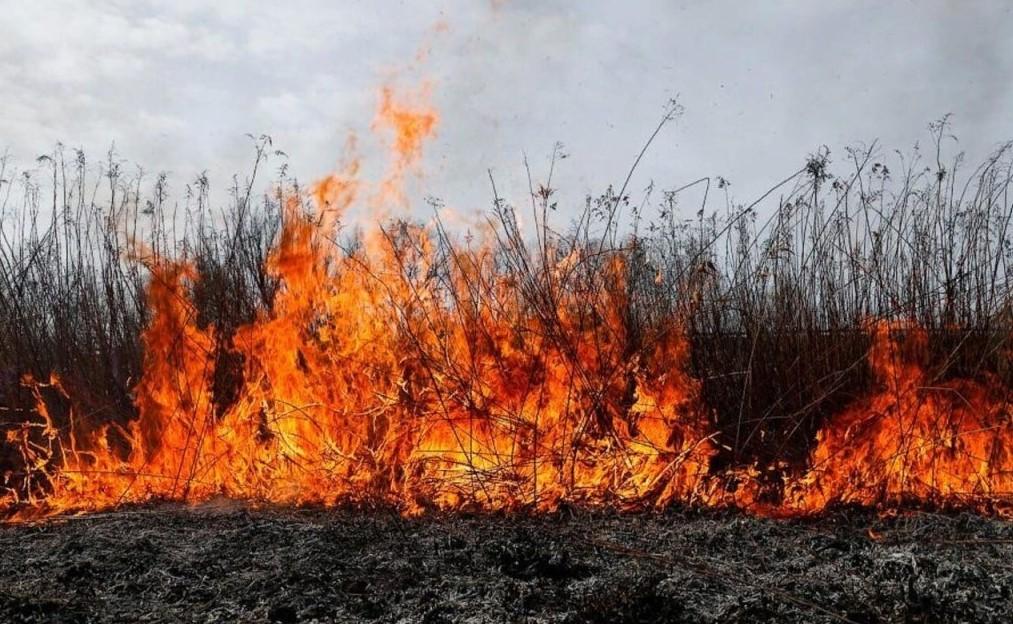 О сложной обстановке с пожарами на территории Ростовской области