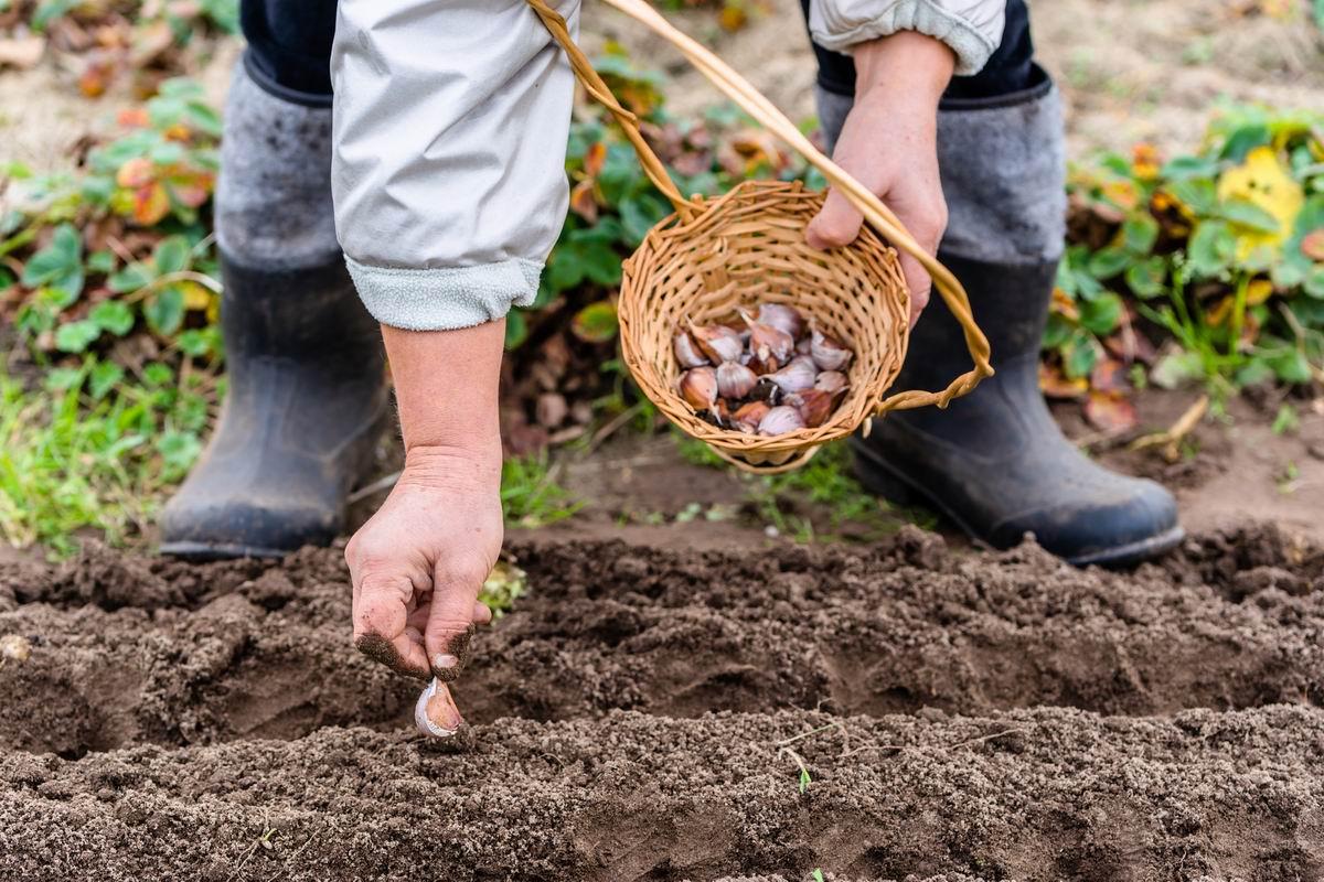 Какие овощи можно сеять семенами под зиму
