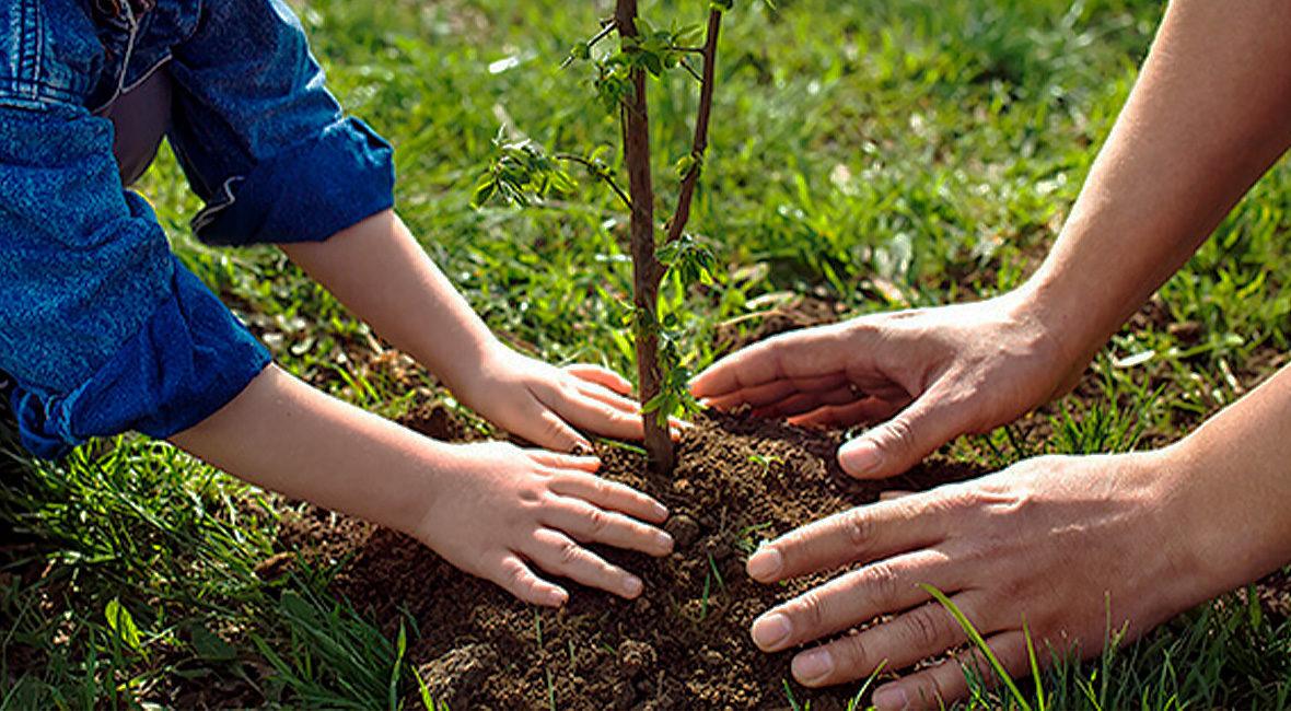Урожай будущего года в саду и на огороде закладывается осенью
