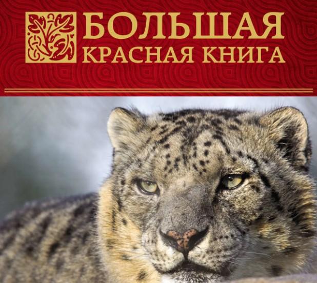 Второклассники Побединской СОШ узнали о  животных Красной книги России и Ростовской области