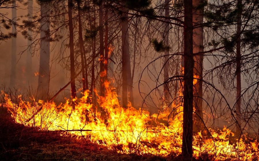 Специалисты оценили ущерб от пожаров в Ростовской области