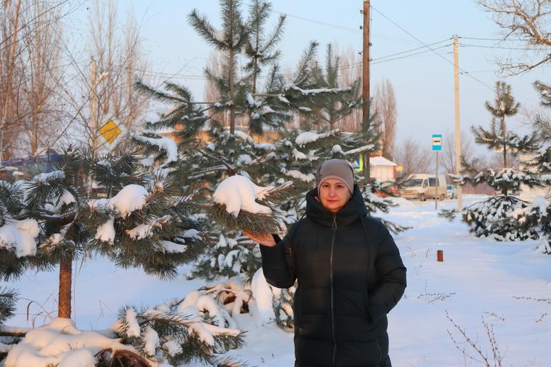 В станице Романовская неизвестный вандал спилил сосну в сквере, созданном местными жителями