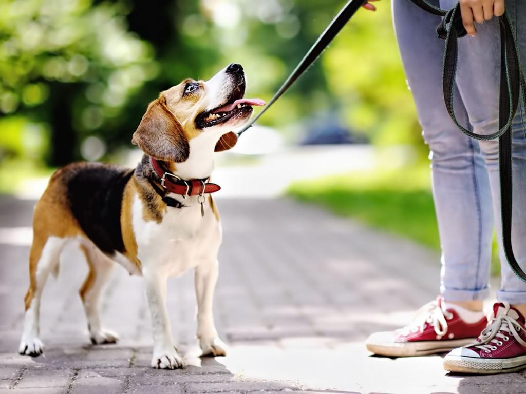 Жителям Романовского сельского поселения напомнили правила содержания домашних животных