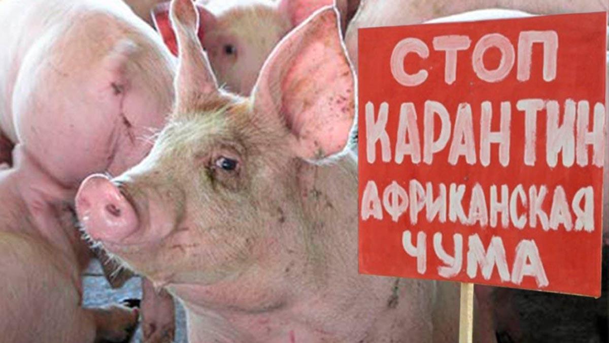 В мясной продукции предприятия Ростовской области обнаружен генетический материал возбудителя африканской чумы свиней