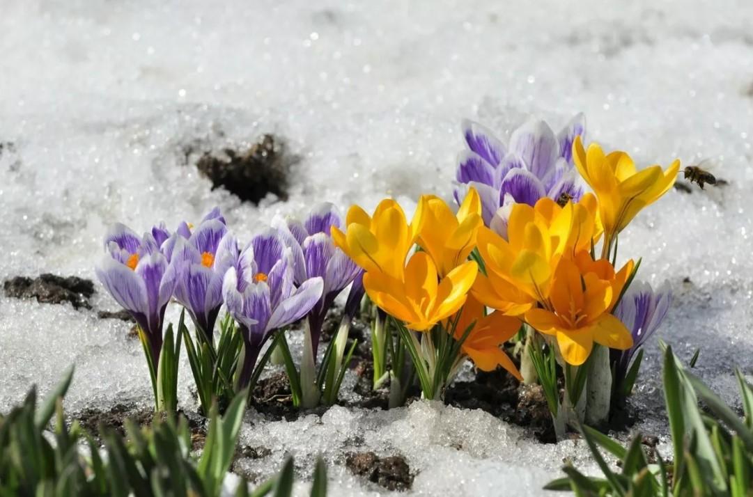 Март: даты и события