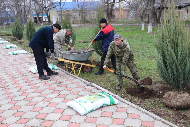 25 кустов можжевельника украсят  территорию мемориала «Скорбящие вдовы»