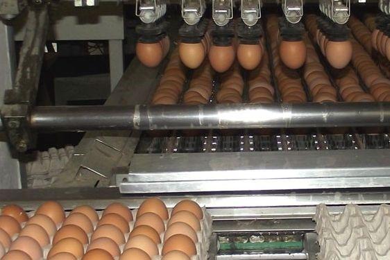 В Ростовской области возобновляют деятельность две крупные птицефабрики