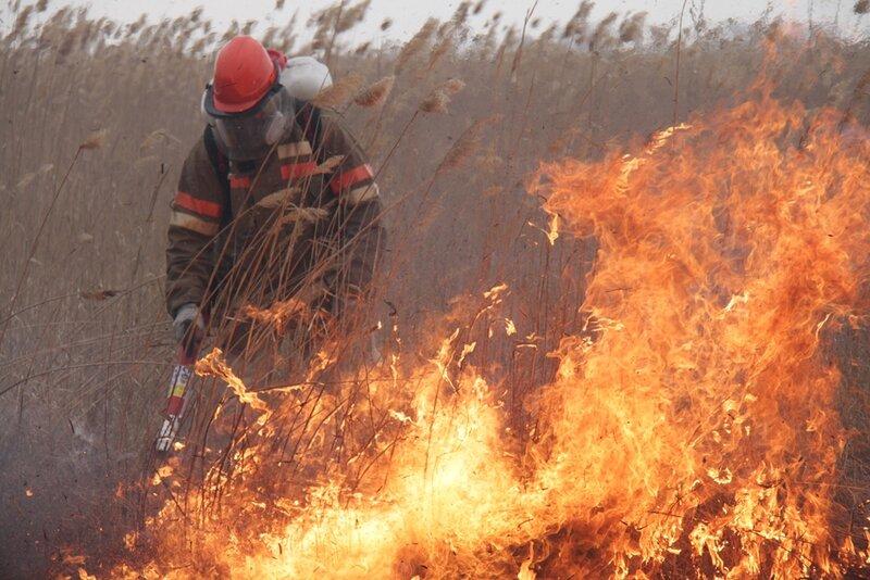 Жителям Волгодонского района напомнили о запрете выжигания сухой растительности