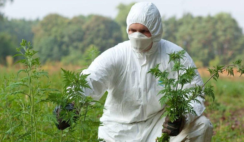 Меры борьбы с карантинными растениями в Волгодонском районе