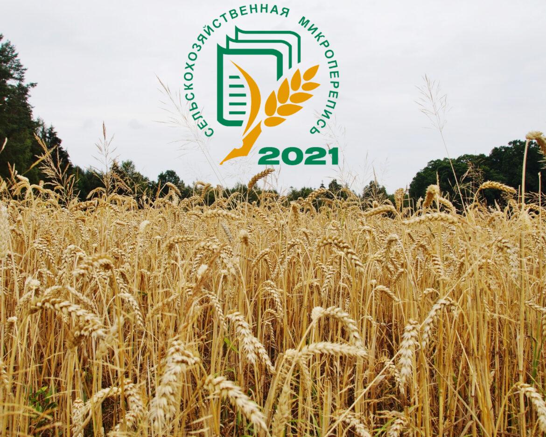 Первая сельскохозяйственная  микроперепись пройдет в августе 2021 года