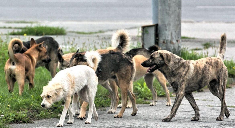 Стаи бродячих собака терроризируют жителей хутора Парамонов