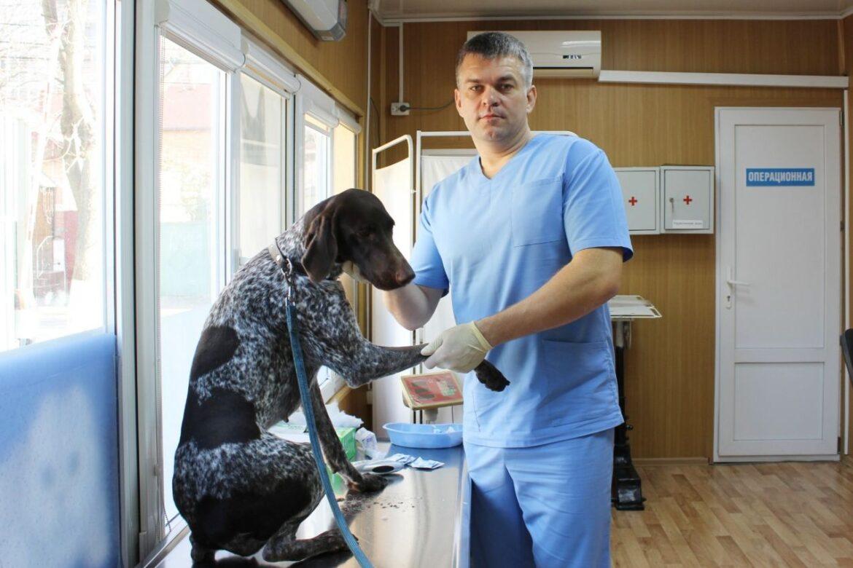 День льготной стерилизации домашних и безнадзорных животных проведут государственные ветлечебницы в 16 городах и районах Дона