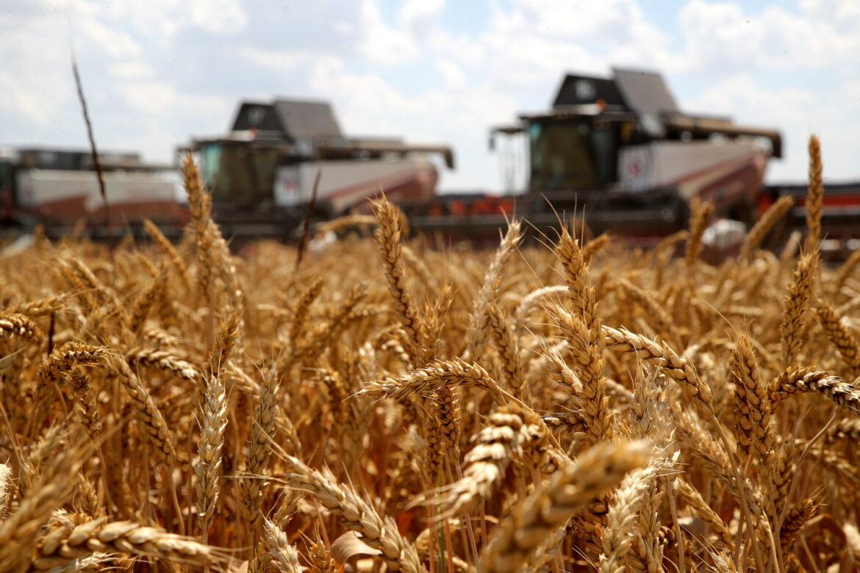 Уборка зерновых и зернобобовых культур в Волгодонском районе подходит к концу