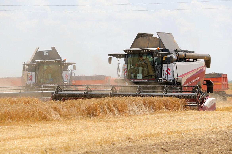 Валовой сбор ранних зерновых на Дону превысил 10 млн тонн