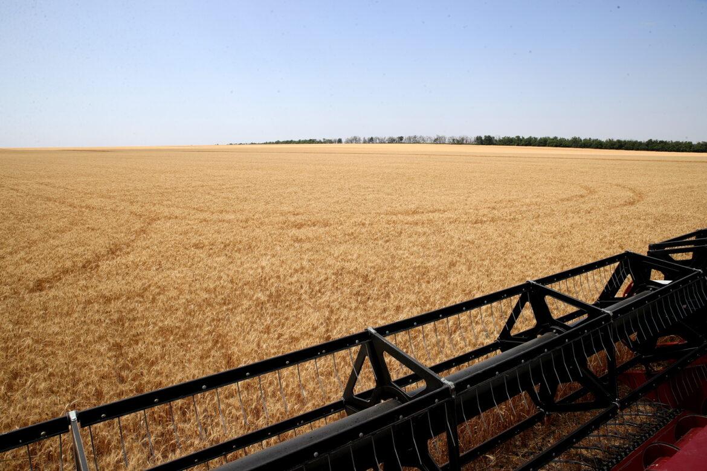 В Волгодонском районе стартовала уборка урожая ранних зерновых и зернобобовых культур