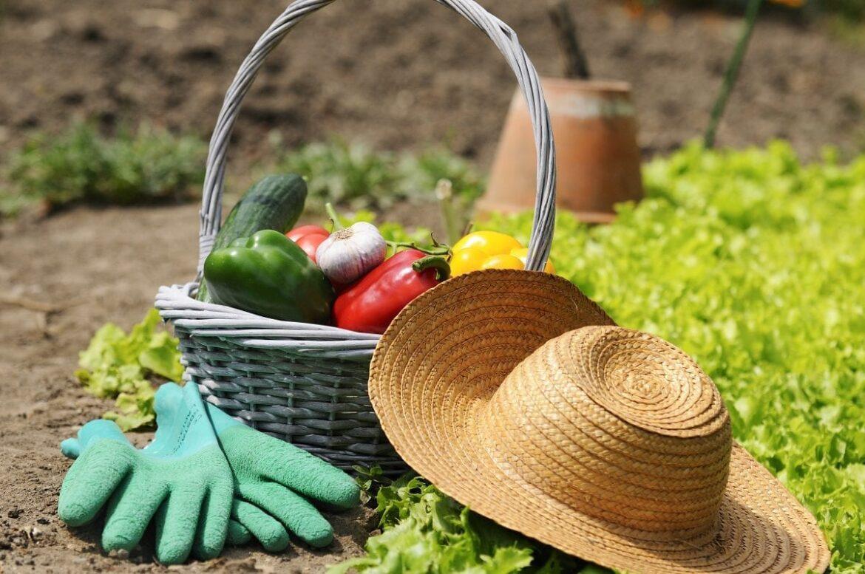 Что нужно успеть сделать в июле в саду и огороде