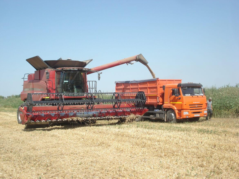 Уборка урожая озимой пшеницы на полях Волгодонского района преодолела экватор