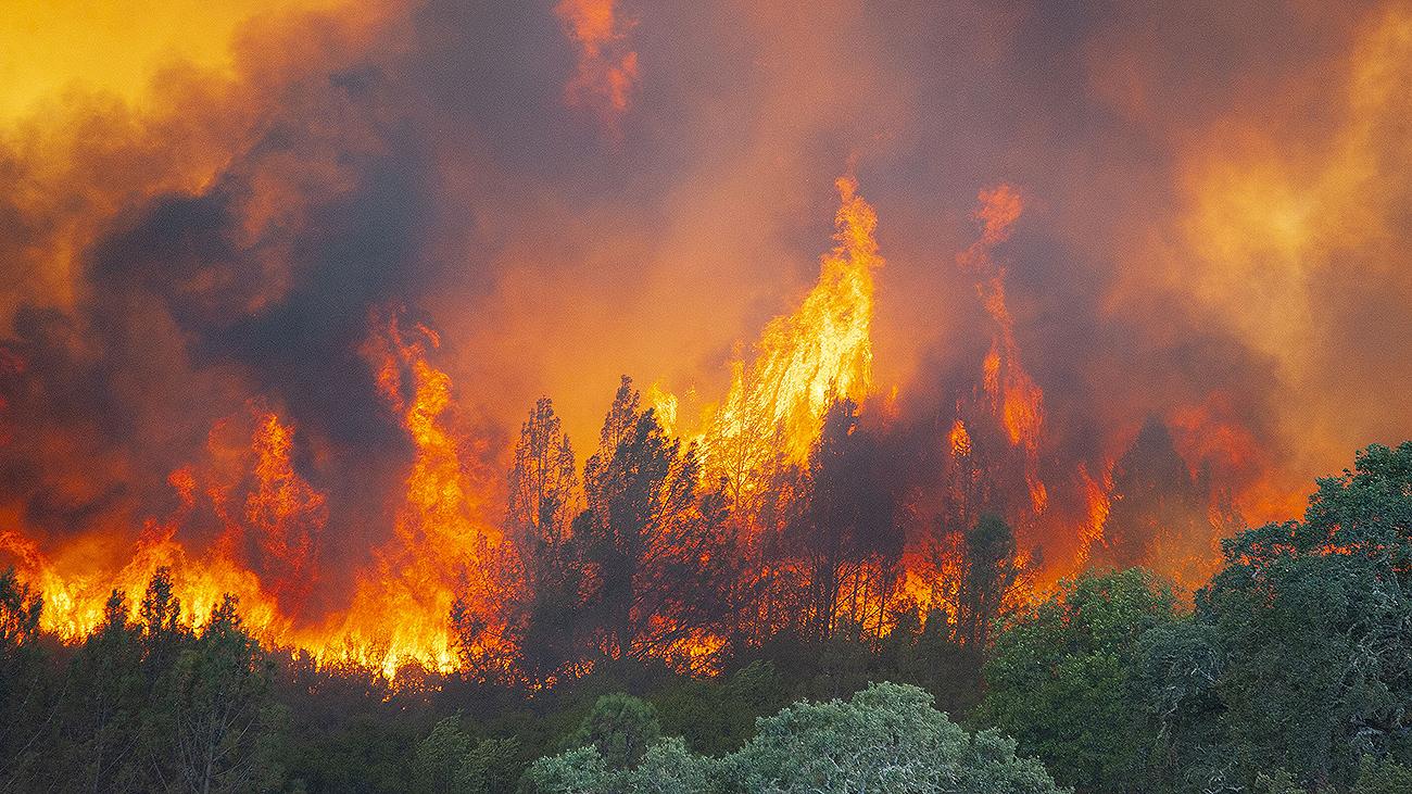 Вина человека при возникновении глобальных пожаров
