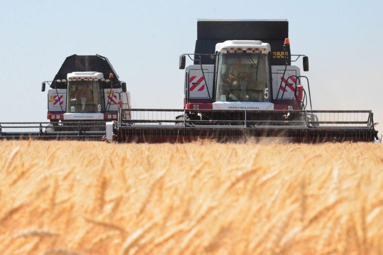 Полевой дневник: жатва ранних зерновых на Дону выходит на финишную прямую