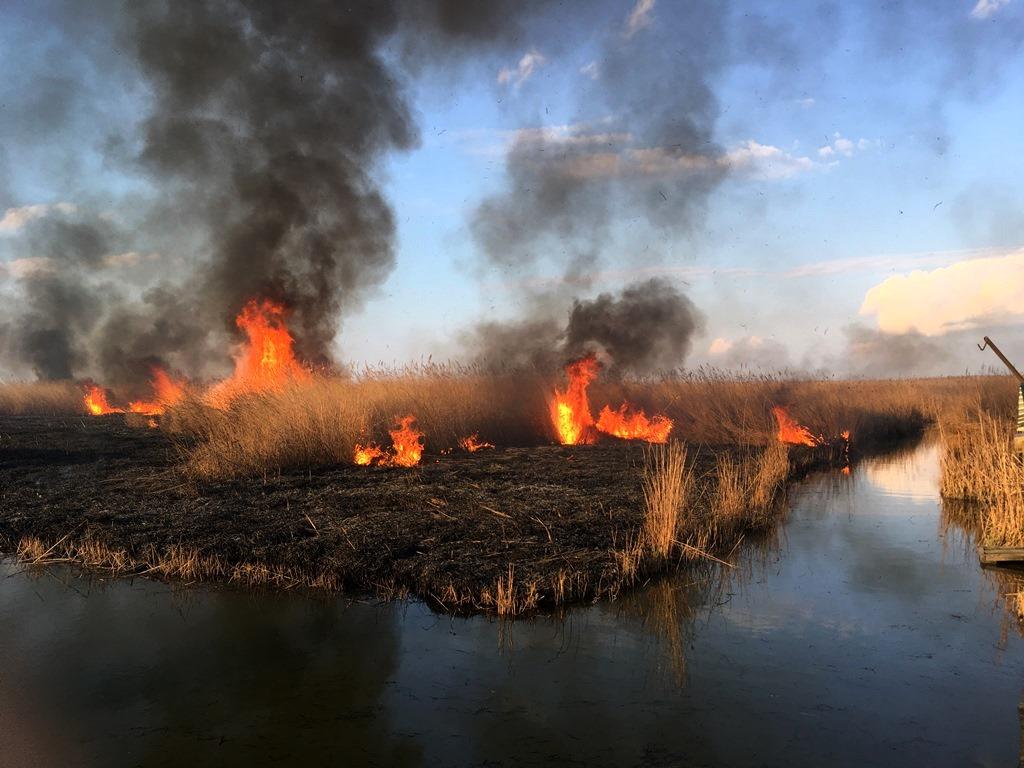 За выжигание сухой растительности предусмотрена административная ответственность
