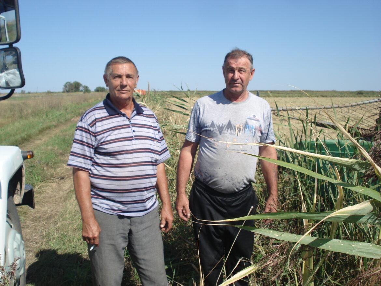 Механизаторы ООО «Мелиоратор» первыми в Волгодонском районе приступили к массовой уборке риса