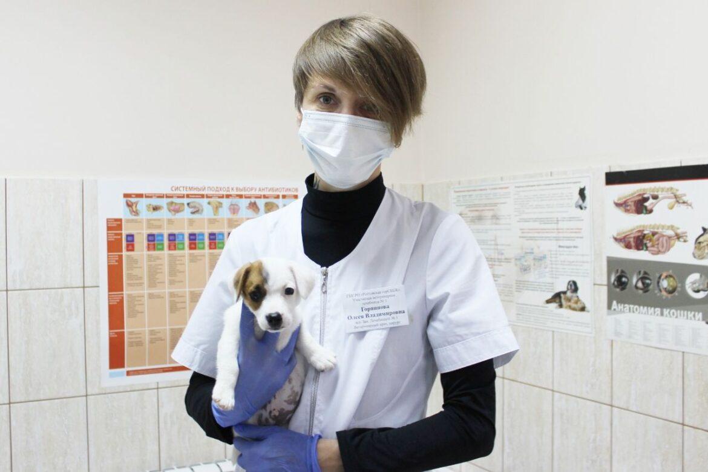 День льготной стерилизации собак и кошек пройдет на Дону 28 октября