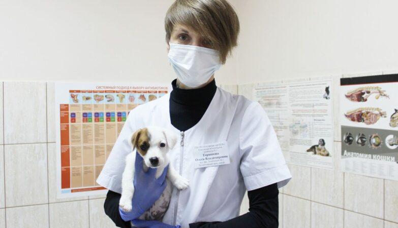 sterilizatsiya